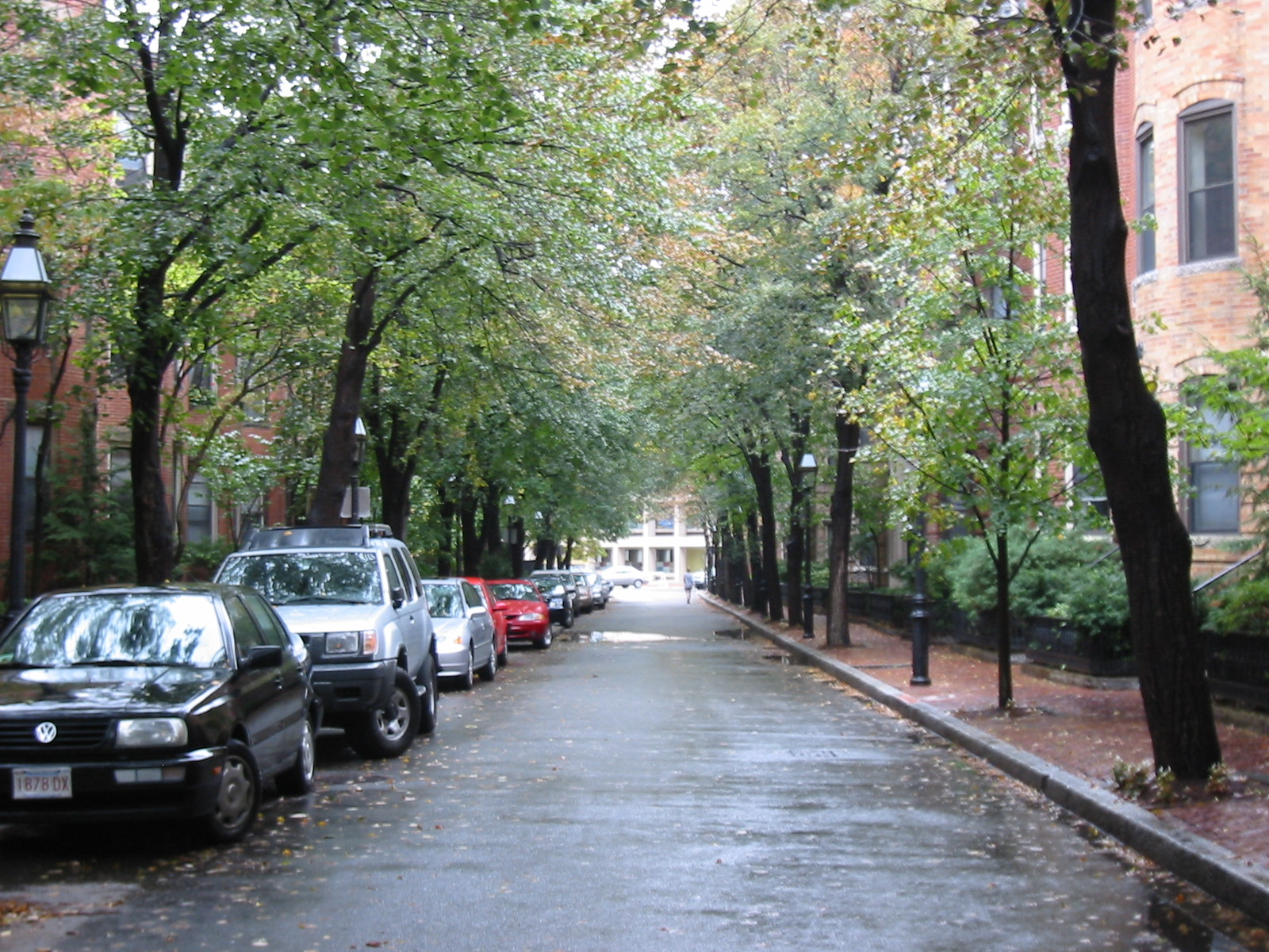 city street lined with trees