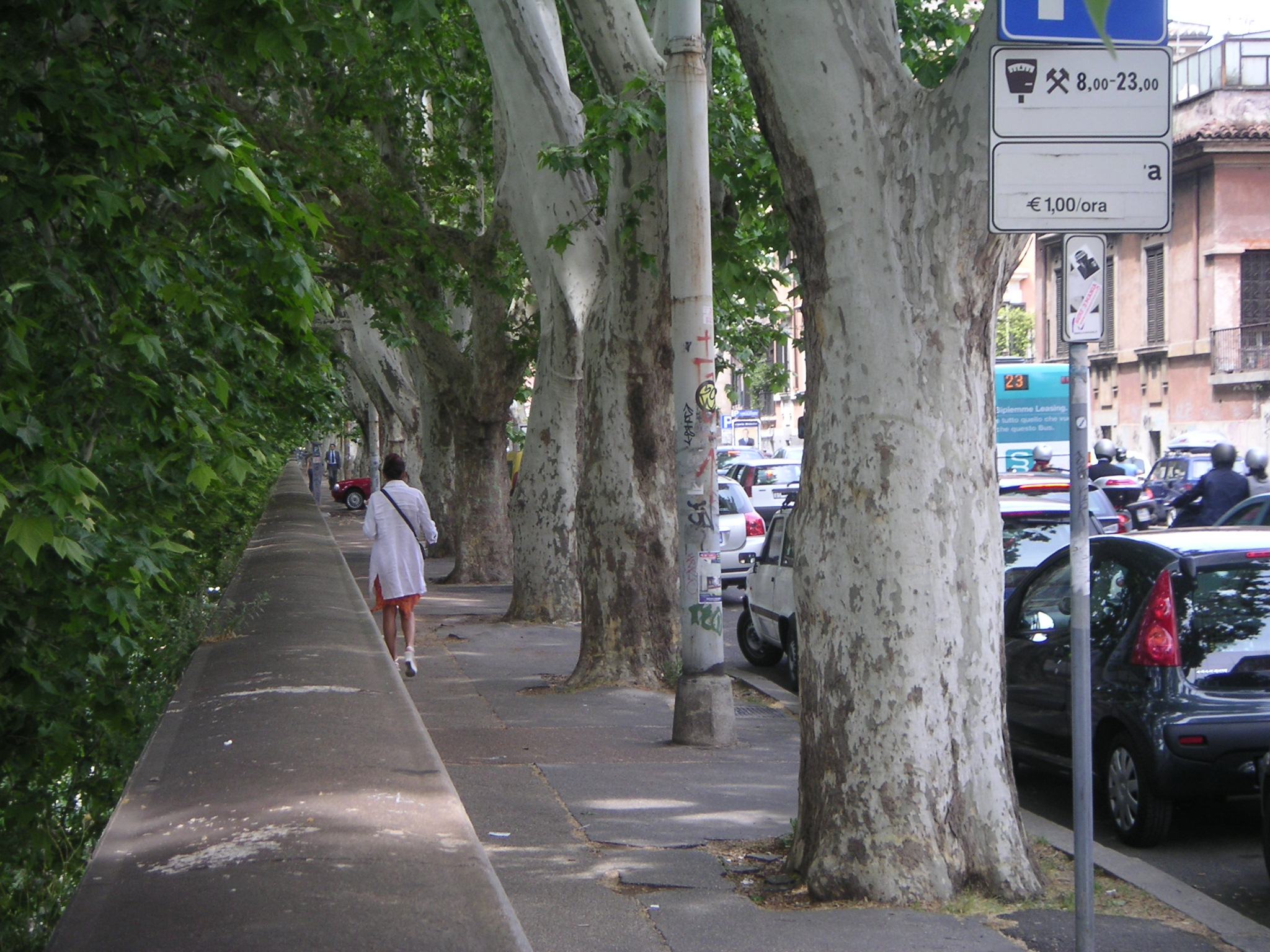 woman walking on street with trees