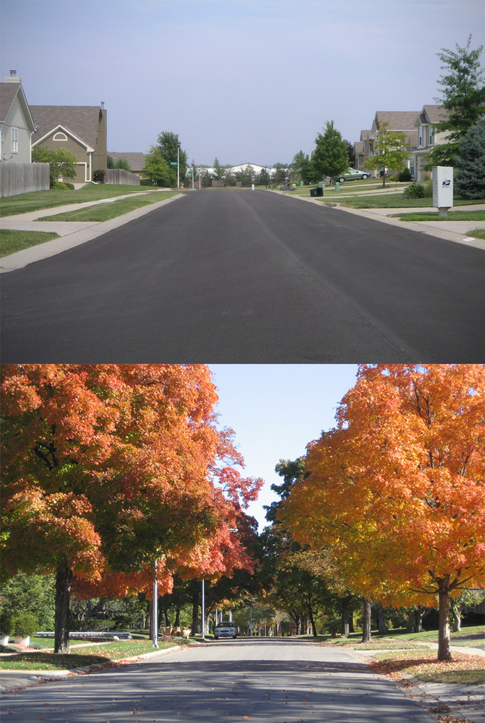 street without trees vs. street with trees